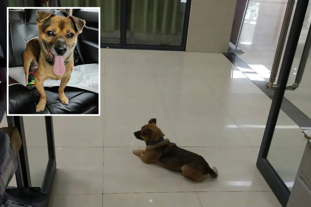 Loyal dog waits at Wuhan hospital for 3 months after owner's Covid death