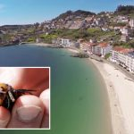 Man, 73, killed by swarm of 'murder' hornets' deadly cousins in Spain as coronavirus lockdown eased