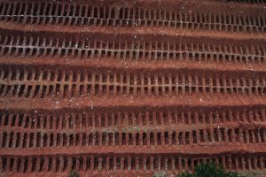 Mass grave for thousands of Brazil coronavirus victims seen in chilling aerial picture as 'worst is yet to come'