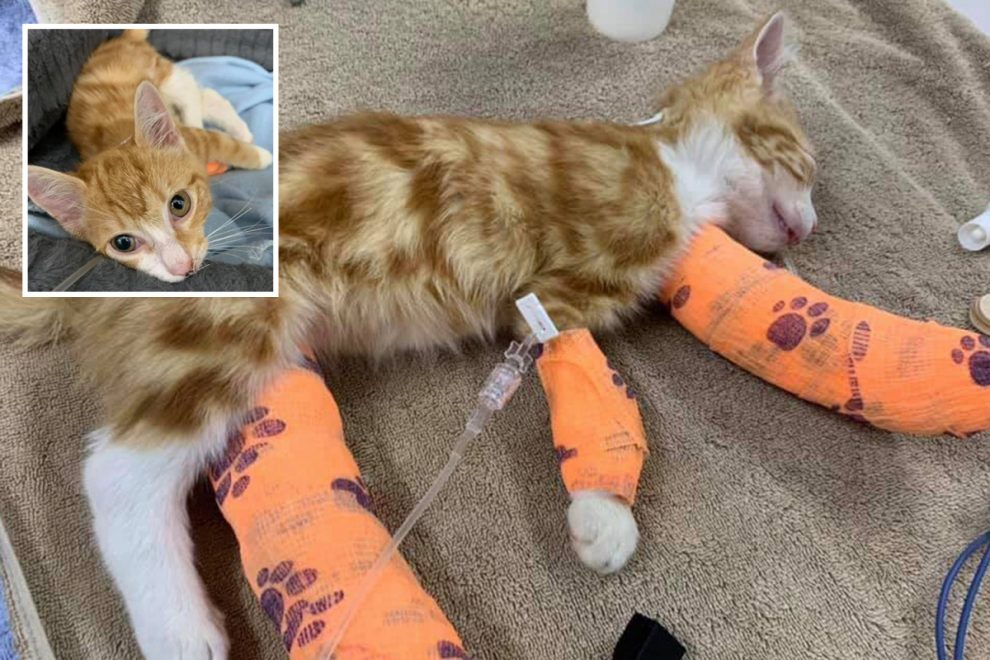 Tiny kitten called 'Wee Rupert' horrifically injured when cruel thugs deliberately broke his legs in 'savage attack'