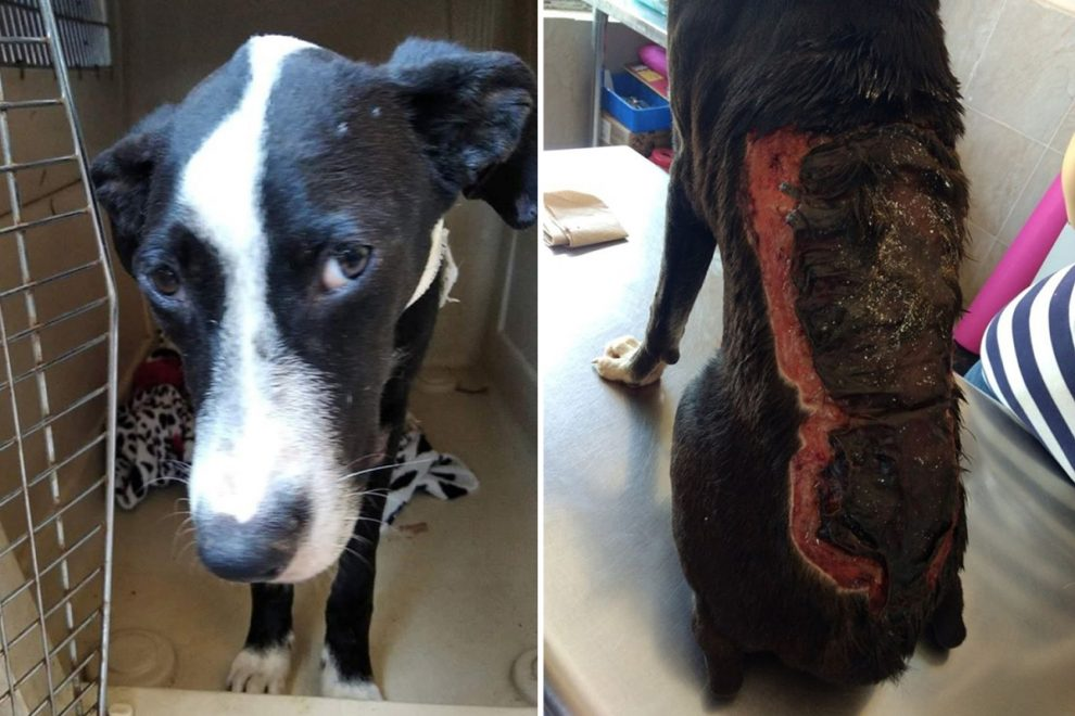 Cruel owner 'threw boiling water over dog and cut shapes into his skin' as neighbours heard him howling in pain